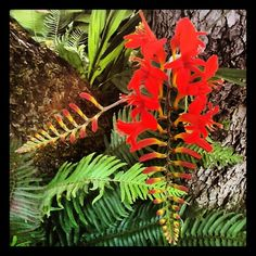 Crocosmia in the Fishingham Garden | 07.09.12 | Photo by Jeff Fisher