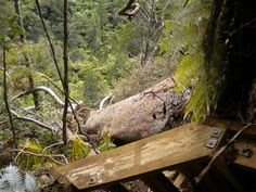 But when you're in my back yard watch your step it can be dangerous.  Waitakere Ranges, Auckland NZ