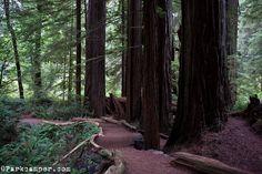 California: Jedediah Smith Redwoods State Park: Boy Scout Trail