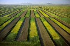 Alex MacLean aerial photography. Wheat Strips Run Perpendicular to the Prevailing Wind. Conrad Area, Montana