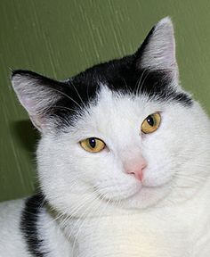 Adopt this pet today!Adoption fees for pets at the Lawrence Humane Society's animal shelter vary depending on a number of factors specific to each animal. Please see our adoption information page  for more information. We utilize an application...