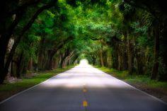 Oak Tree Canopy Road on Martin Highway.   Photo courtesy of Kim Seng | CaptainKimo.com