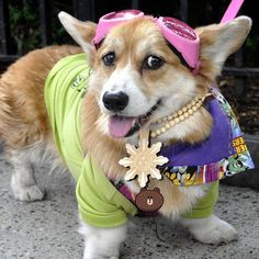 """Why change? Everyone has his own style. When you have found it, you should stick to it."" ― Audrey Hepburn   Hazel Bear, cute Pembroke Welsh Corgi, stylin' it in her doggles, via Flickr Photo Sharing ©eric iLikeComiX"