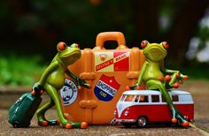 Free Image on Pixabay - Frog, Travel, Vacations, Fun, Funny Going On Holiday, Holiday Fun, Funny Images, Funny Pictures, Vacation Trips, Funny Vacation, Funny Travel, Vacations, Image Fun