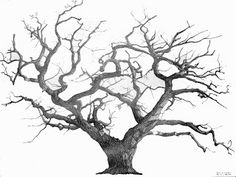 I love trees. So ornate and magnificent. I use trees to inspire me in many designs