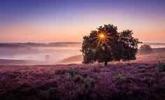 Purple Haze, a photo by Mario Visser