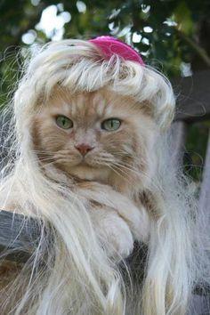 wig cat