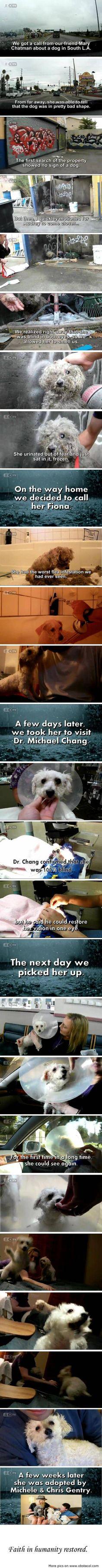 Dog rescue...