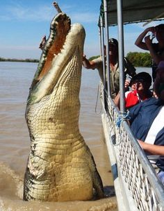 "Giant Salt Water Croc says ""Hi!"" to some tourists in Australia. That's insane!! And its missing an arm?"