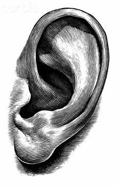 Contour drawing for ear