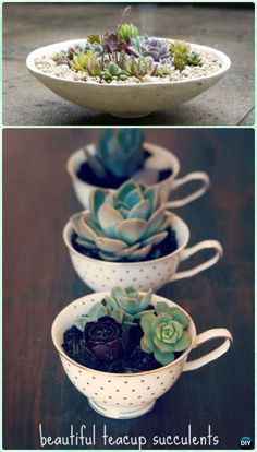DIY Teacup Succulent Garden Instruction- DIY Indoor Succulent Garden Ideas Projects