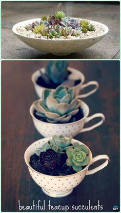 DIY Teacup Succulent Garden Instruction- DIY Indoor Succulent Garden Ideas Projects