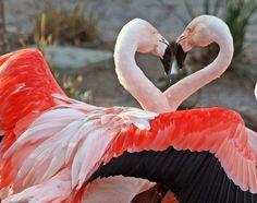Flamingos~
