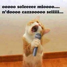 Singing Cat Meme - This cat is funny as it sings: I'm so excited and I just can't hide it. I'm about to lose control, and I think I like it. Oh yeah! Funny Animals With Captions, Funny Captions, I Love Cats, Cute Cats, Funny Cats, Excited Quotes, Baby Animals, Cute Animals, Jokes