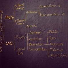 I would've done so much better in my anatomy & physiology class had I seen this flow chart! The divisions of the nervous system; divided into the PNS (afferent/efferent; autonomic/somatic-sympathetic/parasympathetic) and CNS (brain and spinal cord: cerebr Medical Students, Medical School, Nursing Students, Nursing Tips, Nursing Notes, Nursing Programs, Human Anatomy And Physiology, Brain Anatomy, Grey's Anatomy