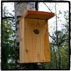 Mitt liv som Toril :o): Fuglekasse oppdatering