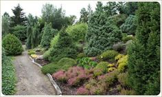 Conifer collection on a hillside, Heather adds pink foreground
