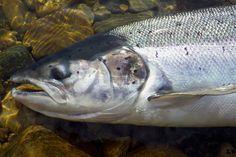 voyage peche mouche paris france pas cher truite saumon agence