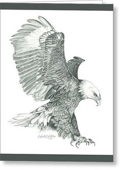 Bald Eagle Drawing - Bald Eagle In A Dive by Robert Wilson Dove Drawing, Eagle Drawing, Animal Drawings, Pencil Drawings, Art Drawings, Drawings Of Eagles, Pencil Art, Aigle Animal, Eagle Sketch