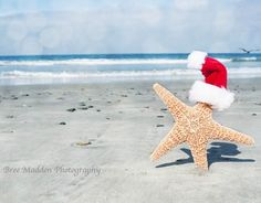 starfish with santa cap and other beach photo christmas ideas - Beach Themed Christmas Cards