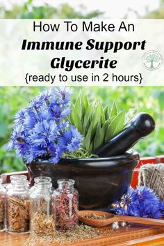 Feel a cold coming on? Make a glycerite that will help support your immune system, ready to use in 2 hours! The Homesteading HIppy via /homesteadhippy/ Natural Medicine, Herbal Medicine, Cold Medicine, Natural Health Remedies, Herbal Remedies, Natural Antibiotics, Natural Healing, Healing Herbs, Natural Herbs