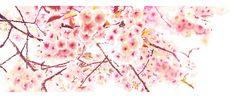 #SAKURA 4 #watercolor_flowers #OHGUSHI #水彩 #particles_粒子 #桜