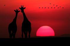 Romantic Africa - Romantic Africa