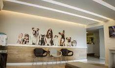 Resultado de imagem para clinica veterinaria espera