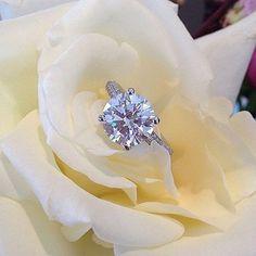 I had to re-post this amazing solitaire by @simongjewelry 😍 Shop this ring (and tons of other amazing #SimonG beauties) at @diamondsbyraymondlee . . #EngagementRing #DiamondRing #WeddingBand #EternityBand #Rings #RoundDiamond #Fashion #Jewelry #CushionEngagementRing #Fashion #CushionCut #WeddingGoals #Goals #RingEnvy #Diamonds #OvalEngagementRing #Bride #RoundEngagementRing #Diamond #PearEngagementRing #Quote #DiamondSolitaire #DiamondRings #TheDBRLLife #HaloEngagementRing #WeddingInspo…