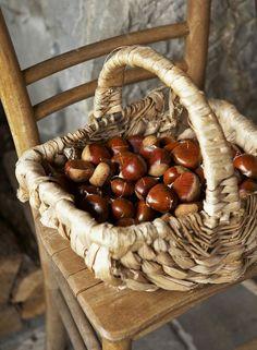 Basket of Chestnuts, Autumn's Harvest . Autumn Cozy, Autumn Aesthetic, Fall Harvest, Autumn Inspiration, Fall Season, Acorn, Fall Decor, Stuffed Mushrooms, Pumpkin