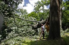 Tree Removal South Jersey