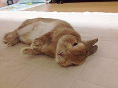 comfy bunny