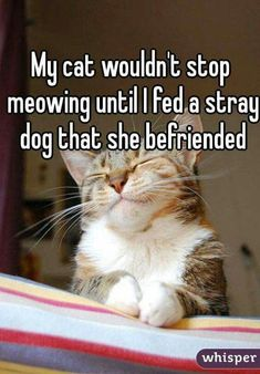 Not mine but we could all learn a little something from this cat!