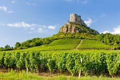 Vignes en Bourgogne...