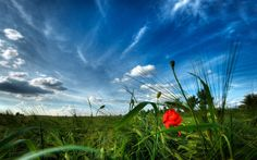Paisaje natural en el campo :: Imágenes y fotos