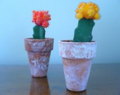 Vibrant Red Grafted Moon Cactus, Colorful Cactus Plant, Cactus Garden, Colorful Cati Plants, Grafted Cactus