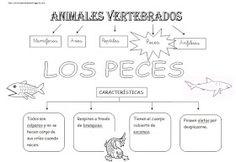 *MIS COSAS DE MAESTRA*: Animales Vertebrados: Esquemas Science Week, Science For Kids, Life Science, Science And Nature, Activities For Kids, Spanish Projects, Montessori Science, School Items, Vertebrates