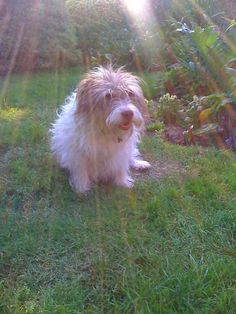 WHO'S MY LITTLE RAY OF SUNSHINE...Ozzy, one of my dogs, dreaming of stardom...