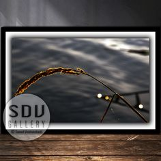 Downloadable abstract, digital photo, printable wall art, dream, plant, river, sunlight, water, spring, branch, light, Vienna, Austria Photo Tree, Landscape Photos, Nature Photos, Printable Wall Art, Spring Branch, Digital Art, Printables, Vienna Austria, Abstract