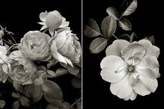 We're adding these grayscale beauties to our gallery wall quicker than you can say #nofilter