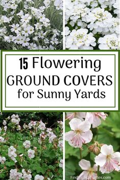 Flowering ground covers for Sun filled yards are the prefect solution when growing grass is a challenge. Ground Covers can address common garden problems. Hillside Landscaping, Landscaping With Rocks, Front Yard Landscaping, Inexpensive Landscaping, Hillside Garden, Landscaping Ideas, Phlox Plant, Geranium Plant, Ground Covers For Sun