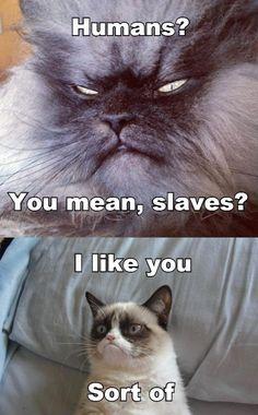 Grumpy Cat meets Sinister Cat