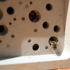 Buy Bee brick - Provides a stylish nesting site for solitary bees: Delivery by Crocus Bee House, On The High Street, Bee Keeping, Cavities, Blue Green, Concrete, Brick, At Least