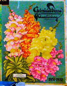 Gebrudertippe (from Germany) Old lithograph seed packet.