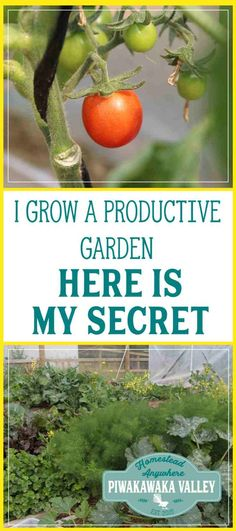 Do you want to know a secret? I successfully grow a very productive garden and feed our family of 5 year round from it in less that 2 hours per week. Let me share my secrets with you.