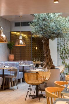 The Bandol Restaurant olive tree