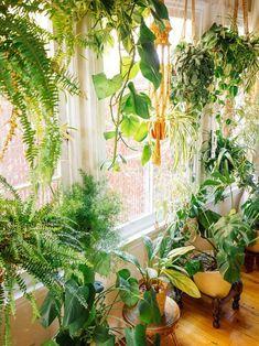 "Plant life "" indoor houseplants "" boho decor "" jungalow "" ca Hanging Plants, Indoor Plants, Jardim Vertical Diy, Vertical Garden Plants, Decoration Plante, Flowers Decoration, Room With Plants, Plant Rooms, Décor Boho"