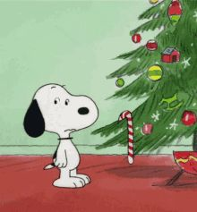Find GIFs with the latest and newest hashtags! Search, discover and share your favorite Snoopy GIFs. The best GIFs are on GIPHY. Christmas Dance, Merry Christmas Funny, Peanuts Christmas, Christmas Cartoons, Charlie Brown Christmas, Christmas Humor, Christmas Images, Christmas Ideas, Xmas