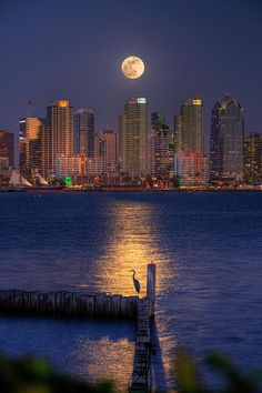 ~~Blue Heron Moon | a blue heron basks in the moonlight, San Diego Bay, California by Peter Tellone~~