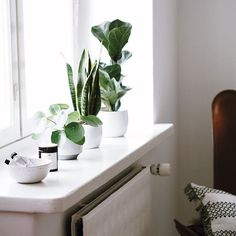 Grow my babies, grow! I don't have a green thumb and that's why I'm not able to get plants to grow well. But I try my best by just by being around, by talking and playing good music #plants #window #greenery #growing #interior4all #interior #interiör #skandinaviskehjem #home #sisustus #viherkasvi #pilea #lyyraviikuna #anopinkieli